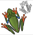 Red eyed tree frog vector image