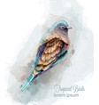 Tropic colorful bird watercolor cute small