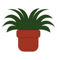a small plant potted in a brown pot or color vector image vector image