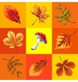 Autumn background set of leaves and mushroom vector image vector image