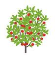 cherry tree cherries fruit vector image vector image