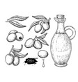 olive oil bottle and olive branch hand vector image