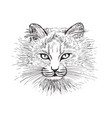 sketch cat vector image