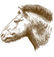 engraving of przewalskis horse head vector image vector image