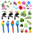 tropical objects set vector image