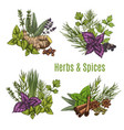 fresh herb and spice sketches for food design vector image vector image