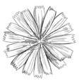 hand drawing flower 2 vector image vector image