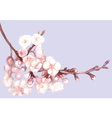 Romantic spring of sakura vector image