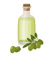 bottle of extra virgin healthy olive oil and fresh vector image