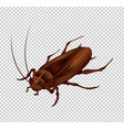 cockroach on transparent background vector image vector image