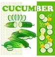 Cucumber and slices isolated on white background vector image