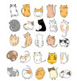 cute bacats cartoon hand drawn style vector image vector image