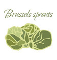 tasty veggies brussels vector image vector image