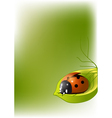 background with ladybug vector image vector image