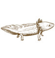 engraving antique of axolotl salamander vector image