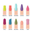 fashion trend female nail manicure shape forms vector image