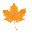 autumn leaf isolated on white background vector image