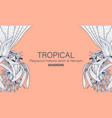 botanical platycerium holtumii jench amp vector image vector image