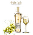 bottle of white wine and glass watercolor vector image vector image