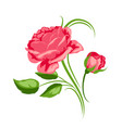 decorative element with red roses beautiful vector image vector image