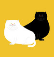 fat white and black cat isolated big thick pet vector image vector image