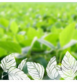 hand drawn soy on blurred background vector image vector image