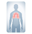 lungs highlighted vector image vector image