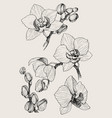 set hand drawn black outline orchid on a white vector image