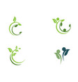 tree leaf icon design vector image vector image