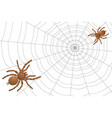 two spiders of a tarantula on a cobweb vector image vector image