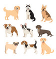 flat style dogs collection cartoon dogs breeds vector image vector image