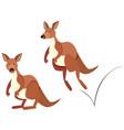 kangaroo hopping on white background vector image