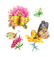 set of watercolor butterflies on white background vector image