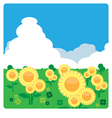 Sunflower meadow in sunny day vector image