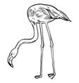 Pink flamingo isolated vector image
