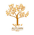 autumn tree with colorful leaves vector image vector image