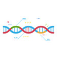 dna vector image vector image