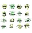 salads vegetables sketch lettering vector image vector image