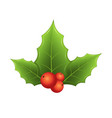 twig of holly with leaves and red berries on vector image