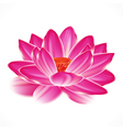 Water lily flower isolated element to your spa vector image
