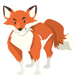 Wild fox on white background vector image vector image