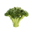 Broccoli head of blots vector image vector image