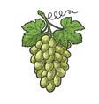 bunch grapes sketch vector image vector image