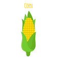 corn vegetarian food cartoon flat style vector image