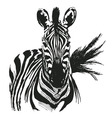 hand drawing zebra vector image