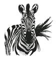 hand drawing zebra vector image vector image