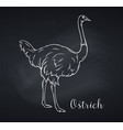 ostrich outline icon chalkboard style vector image vector image
