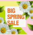 Spring sale design with colorful flowers daisy