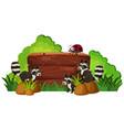wooden board with raccoons in garden vector image vector image