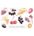 vintage berry sketches set vector image
